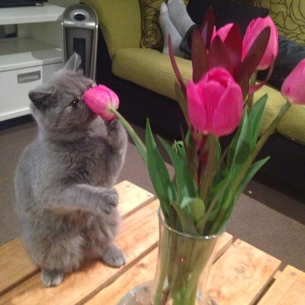 Funny cats - part 99 (40 pics + 10 gifs), cat pictures, cat smelling flower