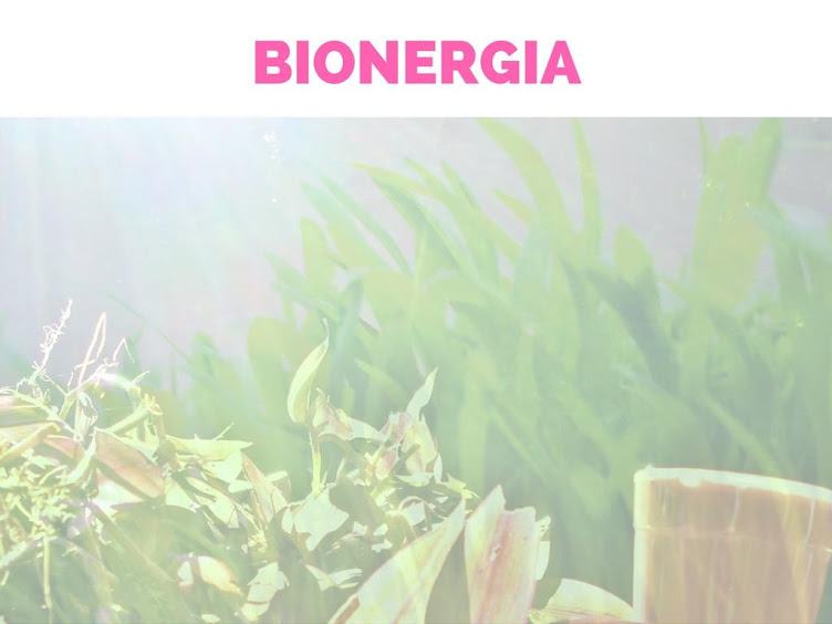 Interações bioenergéticas para alimentar e alinhar nossos campos de energia vital