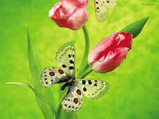 Roses+and+butterfly+in+green+background, Flower images; Beautiful Fresh leaves; Roses; wallpapers; fresh flowers; Beautiful flowers; Wide screen wallpapers