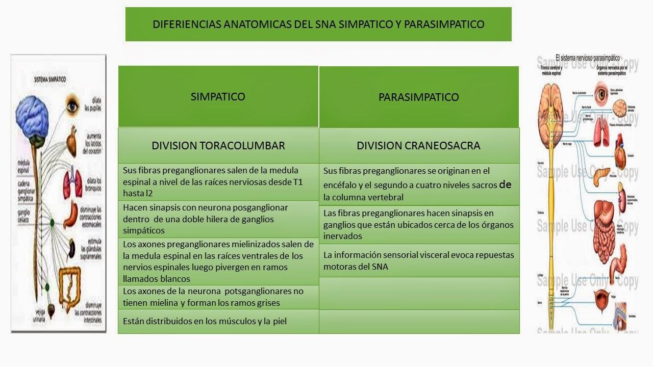 Vistoso Tablas De Anatomía Y Fisiología Regalo - Anatomía de Las ...