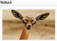 http://www.descopera.ro/natura