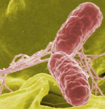http://4.bp.blogspot.com/-7fD-cxN79u8/ThbhyGcBZJI/AAAAAAAAE44/QopEFyLya7g/s1600/salmonella-EQAS.jpg