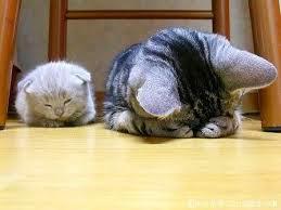 Cara Menghitung Dan Memperkirakan Umur Kucing Dengan Tepat Dan Benar
