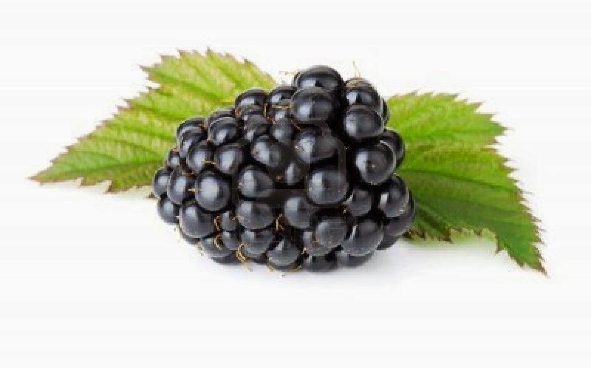 Blackberry fruit wallpaper - Blackberry Fruit Wallpaper
