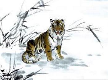 sifat dan kepribadian shio macan