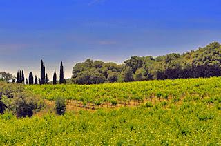 Domaine Lafond Vineyard