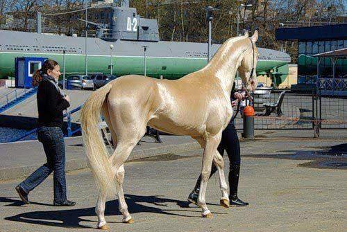 World's most beautiful Horse