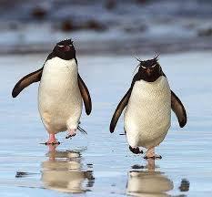 Solusi Google Penguin 2014