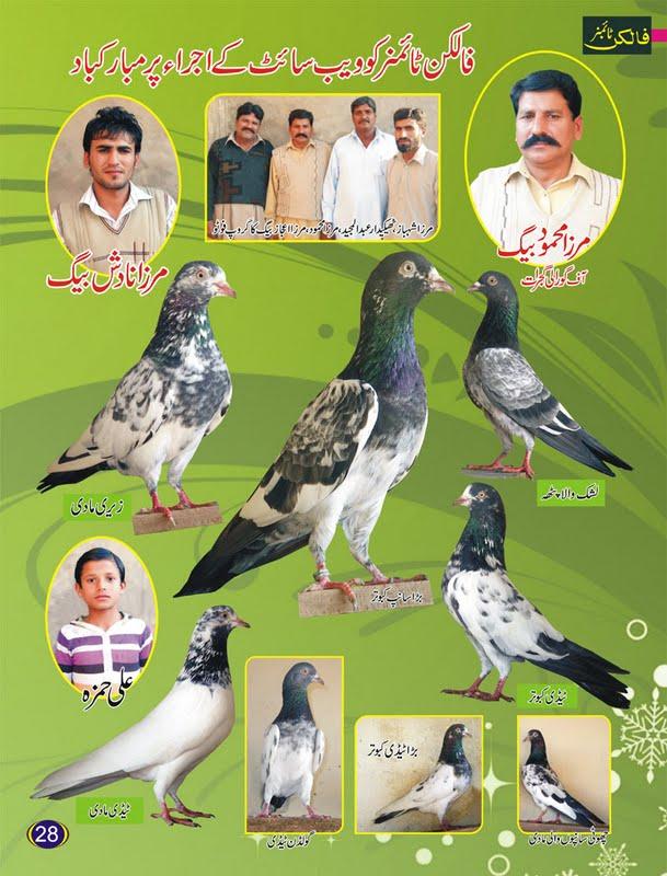 K Magazine Pigeon Pigeons Magazine   Urd...
