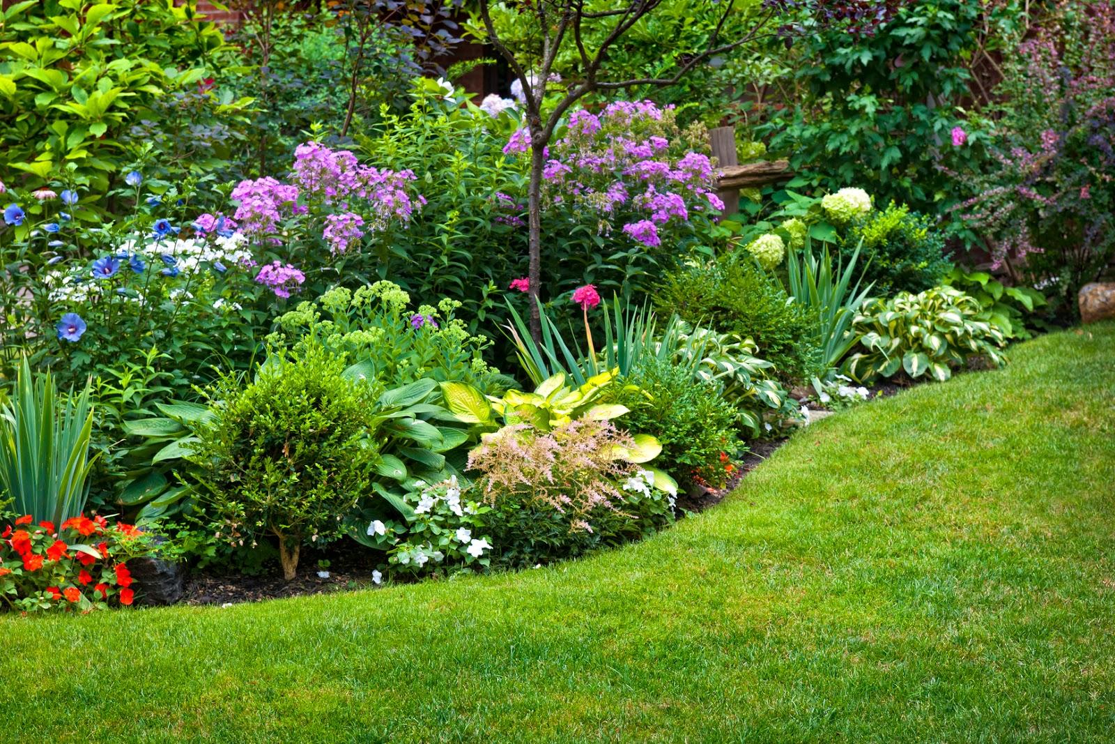 Unique wallpaper plantas flores y jardines exuberantes for Plantas para jardin