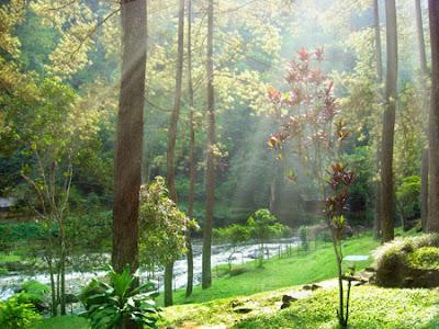 Sinar matahari pagi menembus pepohonan di Maribaya