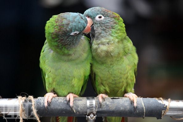 Funny Animals: Funny Animals Kissing Photos