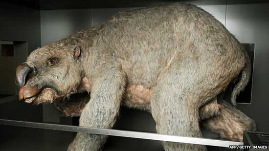 biggest-fossils-amazing-extinct-animals mega wombat