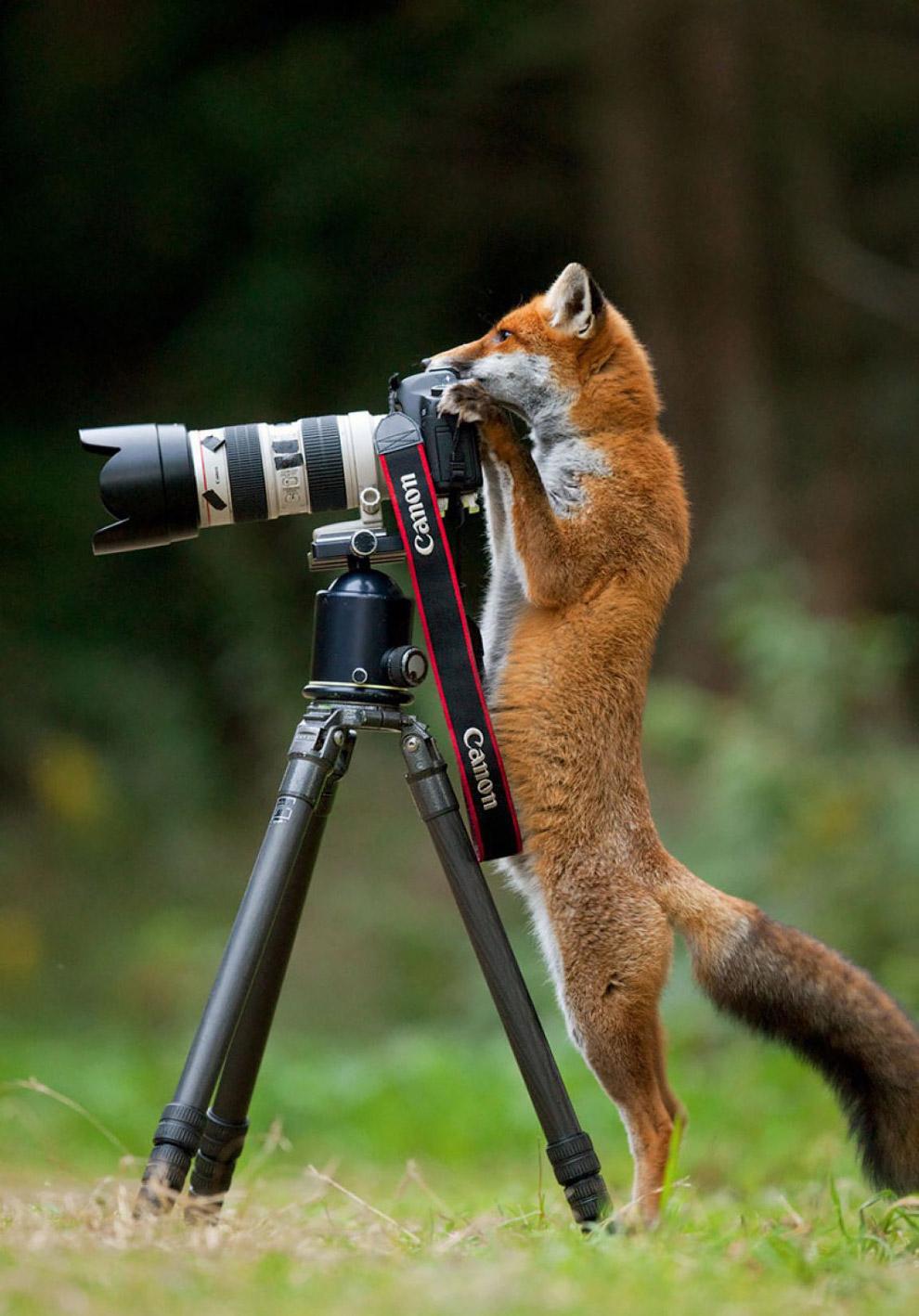 Смешные животные-фотографы (17 фото)