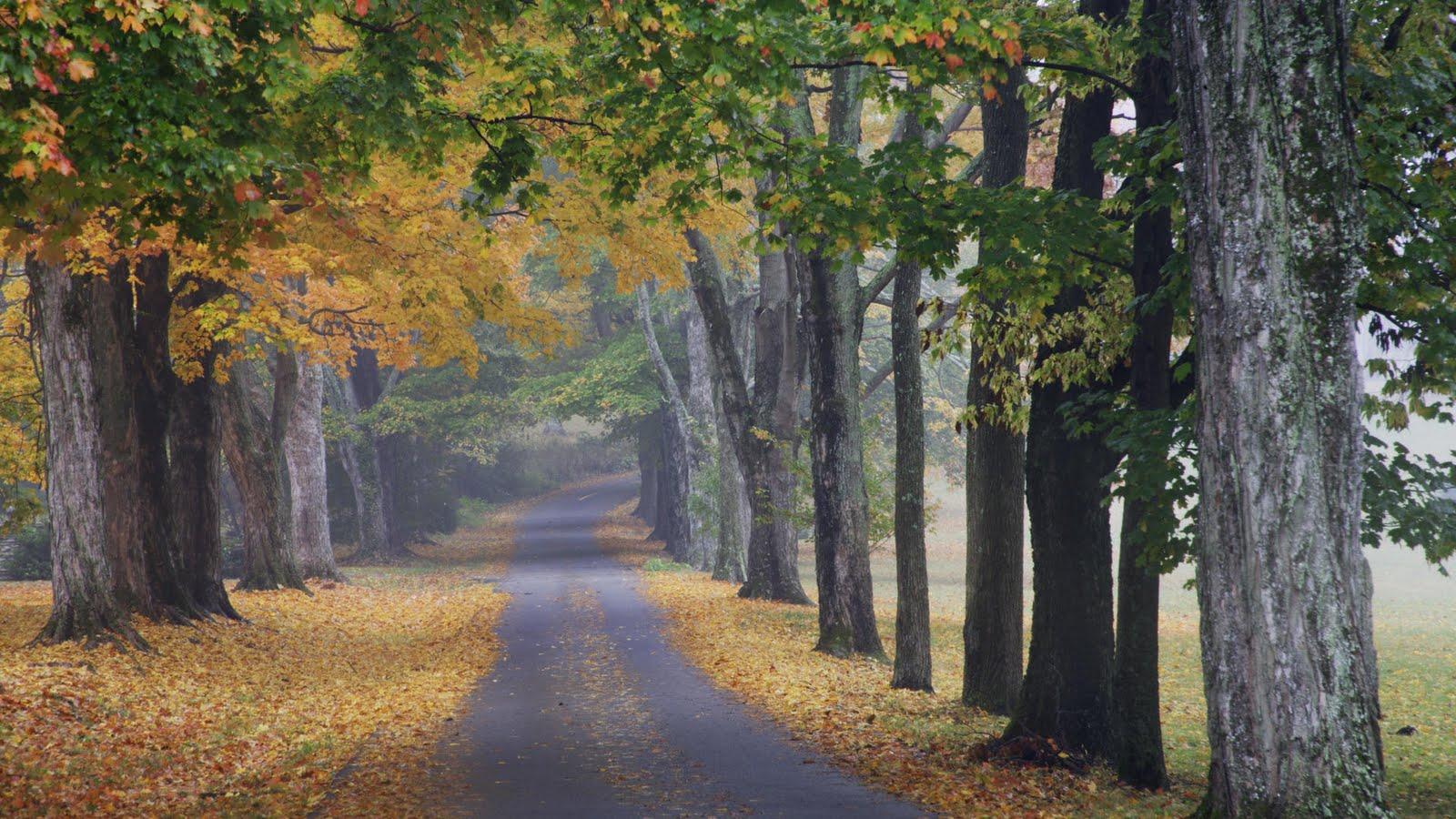http://4.bp.blogspot.com/-7hwbe1Ar4Cc/TofN78mT7rI/AAAAAAAABZY/o23JOLsoXjI/s1600/Journey-into-Fall-Louisville-Kentucky-727020.jpg