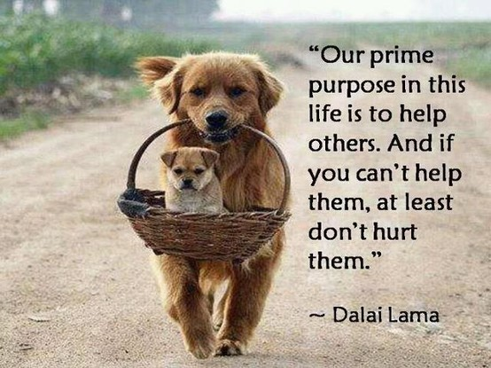 [Image: Our-prime-Purpose-in-Life-Is-To-help-others.jpeg]