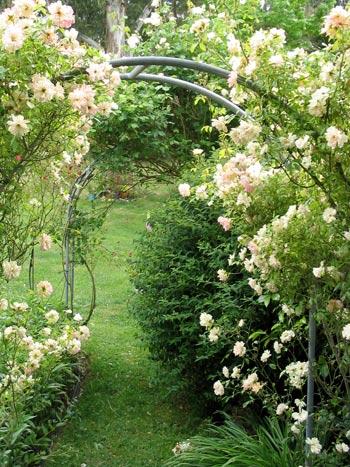 rose-garden-arch