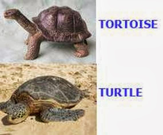 Rules of the Jungle: Different types of turtles