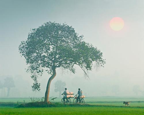 Hình ảnh đẹp về làng quê Việt Nam, cánh đồng Việt Nam