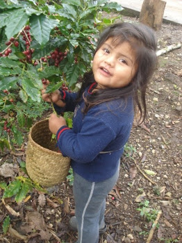Andrea Picking Coffee