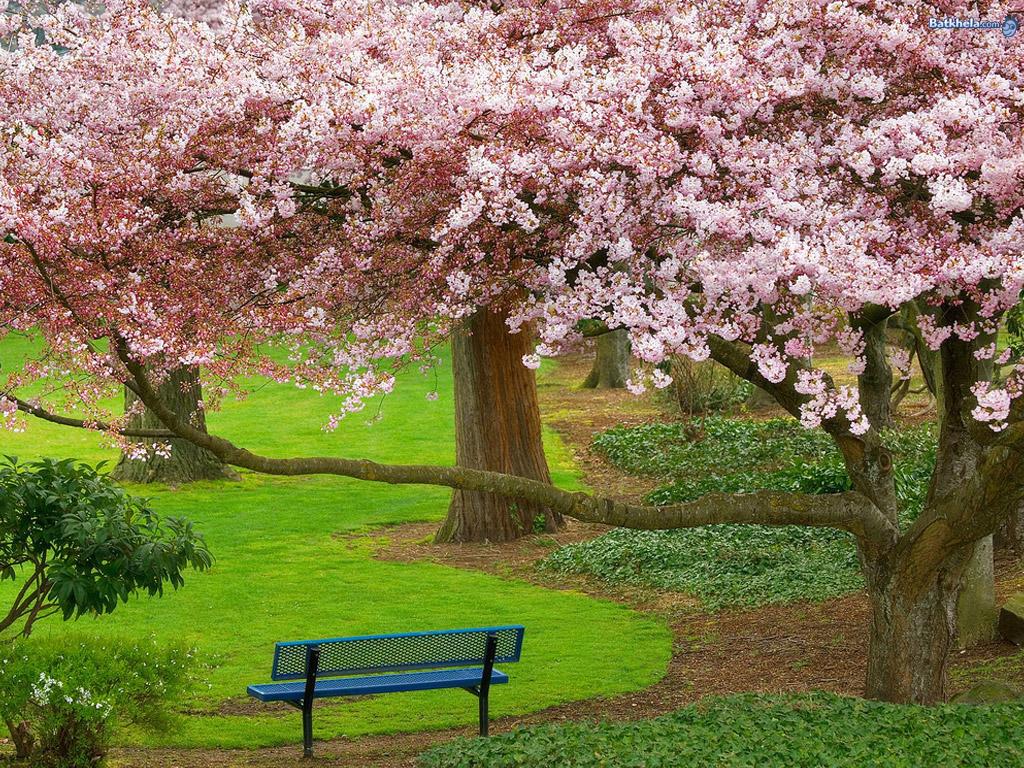 http://4.bp.blogspot.com/-7iiaaaPHD6s/TvPQL3aJ1EI/AAAAAAAAAk0/ujagtEv80Oo/s1600/pic-6260.jpg