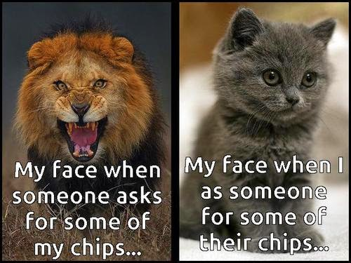 chips meme cat