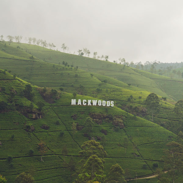 Mackwoods Tea Plantation
