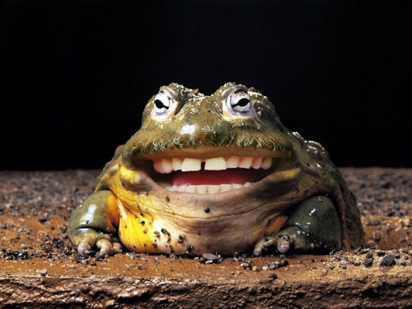 Toad funniest new images pictures funny and cute animals - Funny frog pictures ...