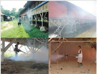 Penyakit malaria like atau Outbreak Leucocytozoonosis