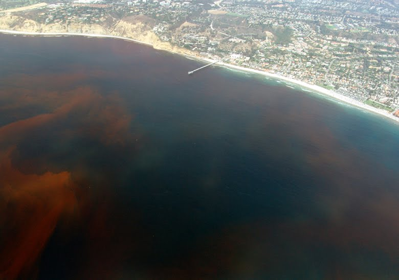 Gulf of Mexico red tide toxin causes respiratory problems and coughing fits to beach go'ers...