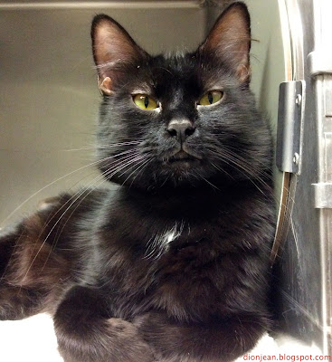 Shelter cats would love a few gifts on Black Friday