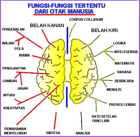 Langkah melatih otak kanan