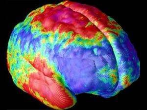 memori otak