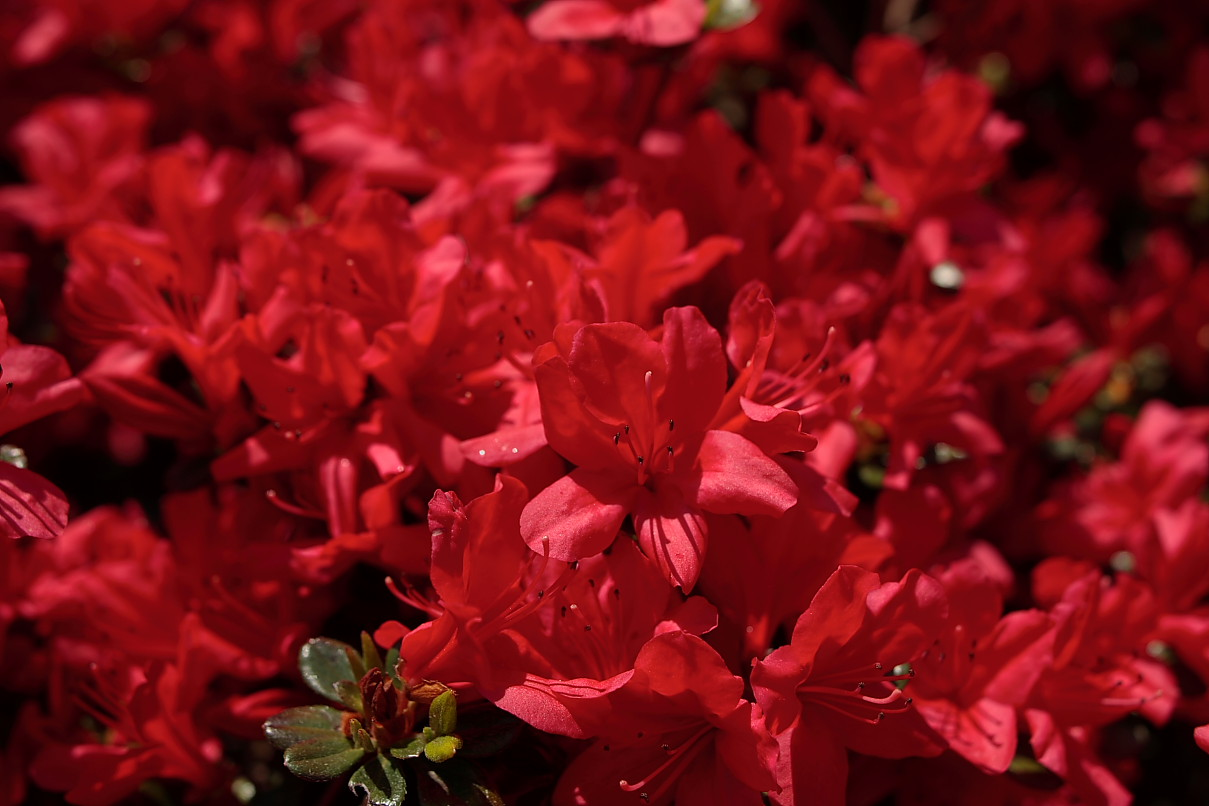 beauteous red flowers