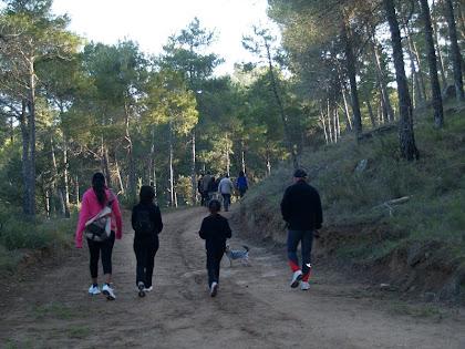 La pista avança per l'Obaga del Serrat de l'Àliga