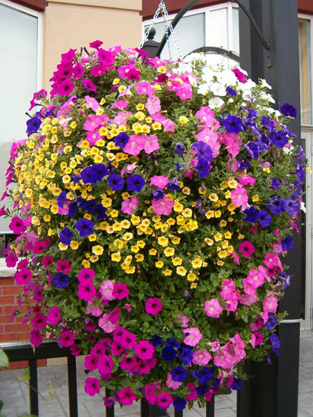 Horkans lifestyle garden centre add colour and interest for Hanging flower pots ideas