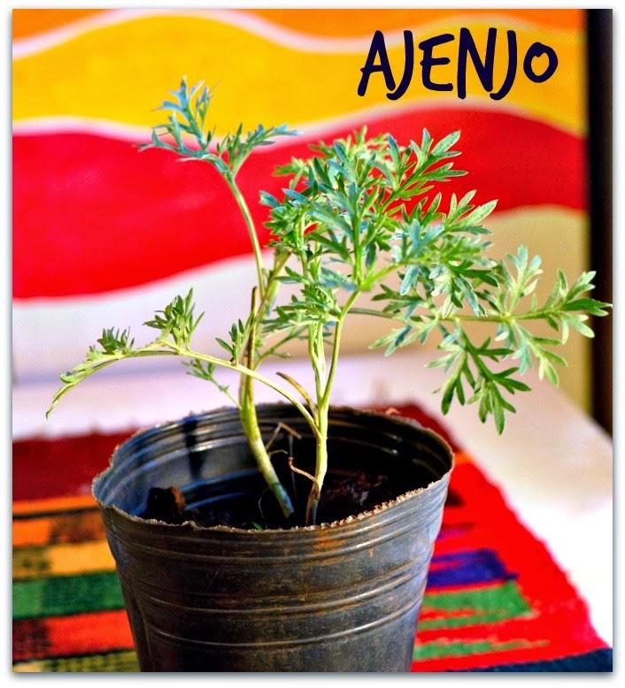 plantin de ajenjo artemisia absinthium