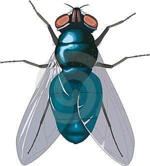 mosca%5B1%5D.jpg