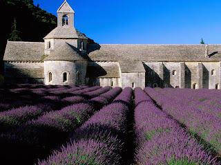 Great Lavender Field