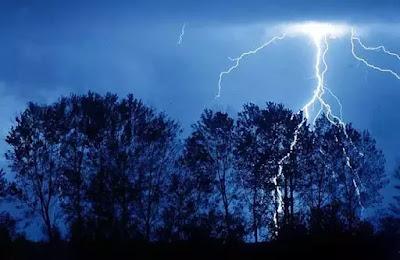 Почему молния часто попадает в дуб?