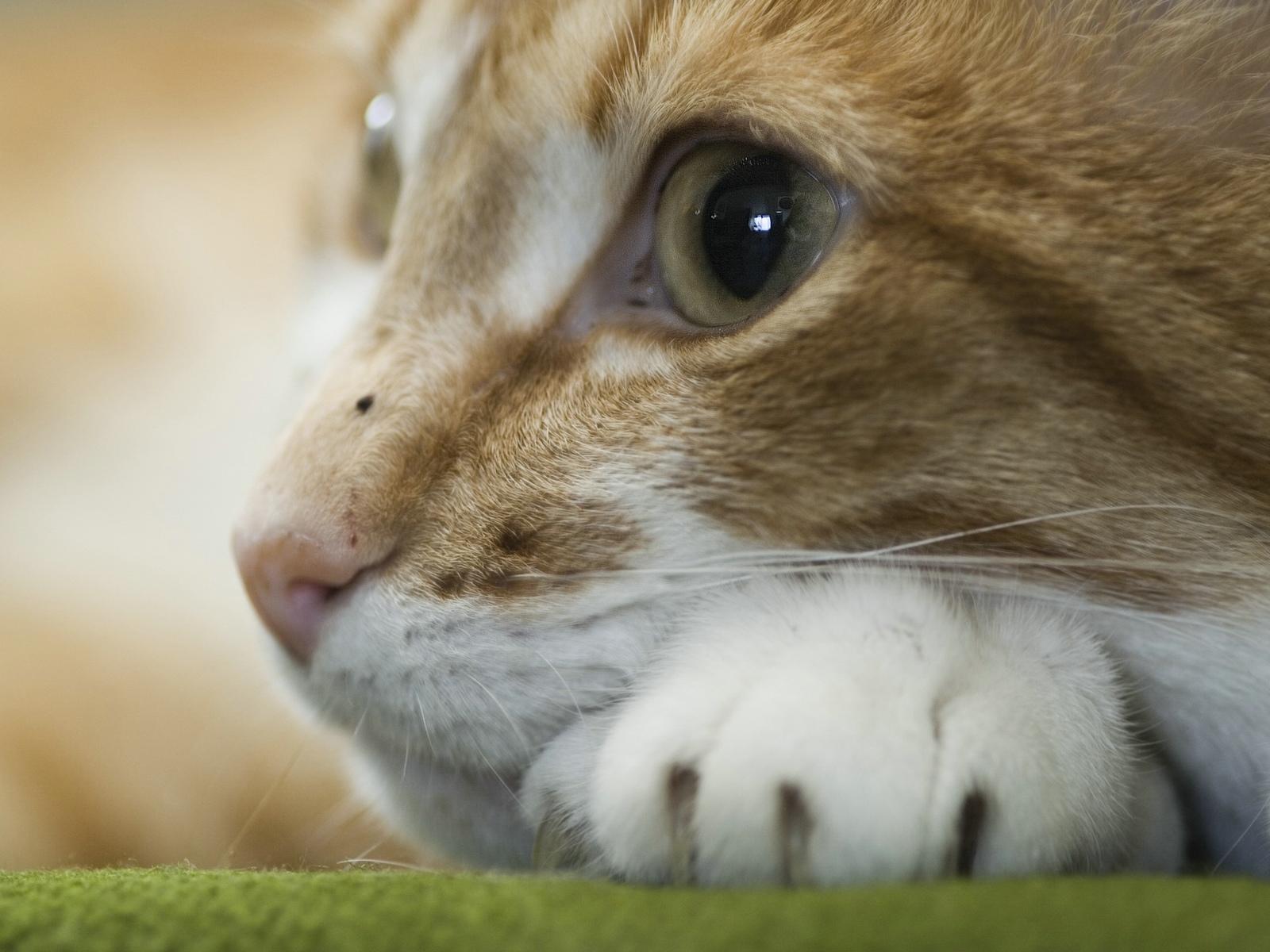 Im genes del mundo animal gatos for Sfondi desktop animali
