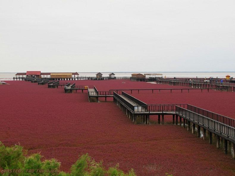 Indah+pantai+berwarna+merah+di+Panjin+China+2.jpg