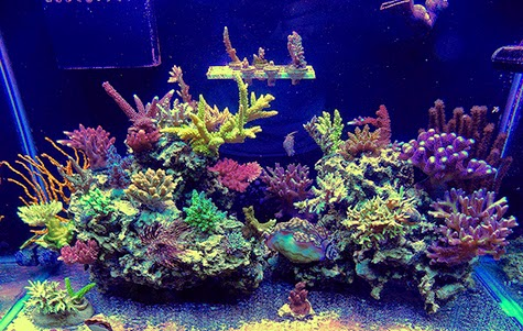 how to choose corals for a reef tank