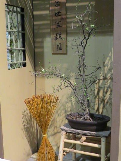 Philadelphia Flower Show Bonsai