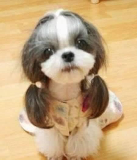 http://4.bp.blogspot.com/-7lpTDoNjwxs/TpKgGS9uy9I/AAAAAAAABVU/ONdW_fnaEFM/s1600/a97931_animal-hair_82.jpg