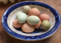 Fresh Eggs from the Farm