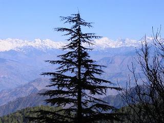 Himachal Information