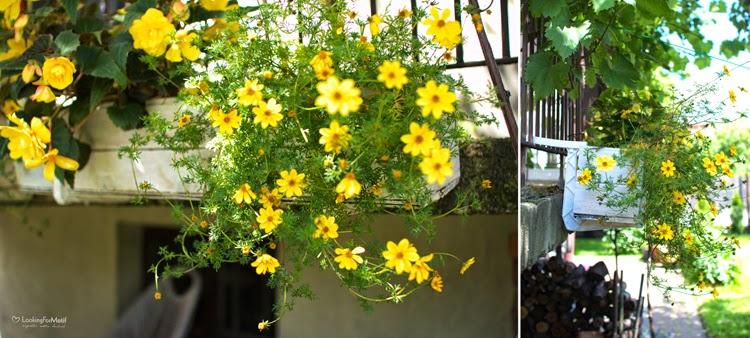 drewniane skrzynki, zrób to sam, DIY, ogród, recyklingowe skrzynki