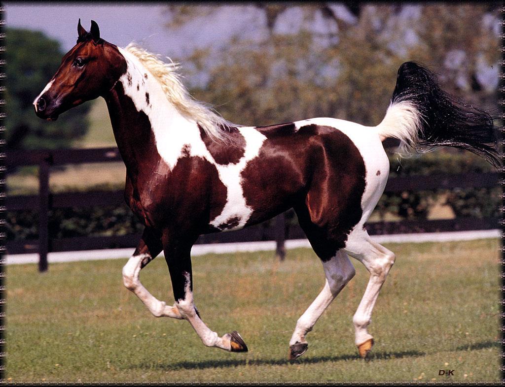 Light brown horse running - photo#22
