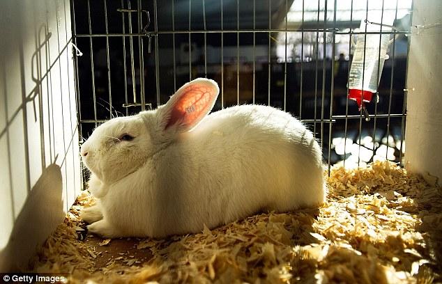 rabbit sexleksak relax stockholm